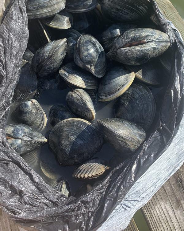 美國東岸挖貝殼Clamming 紐約、紐澤西、麻州地點及攻略