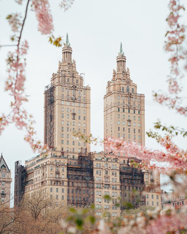 紐約賞櫻花指南 五個各區推薦賞花好去處